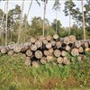 China issues new guidelines to reduce logging
