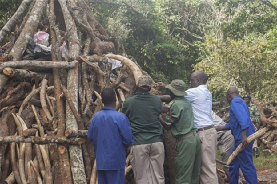 Malawi destroys 2.6 tons of illegal ivory