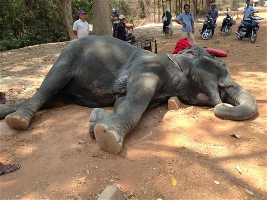 Elephant's sudden death sparks call for stopping wildlife tourism rides