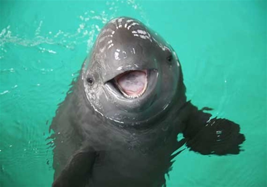 Fishing ban urged to save world's smallest porpoise