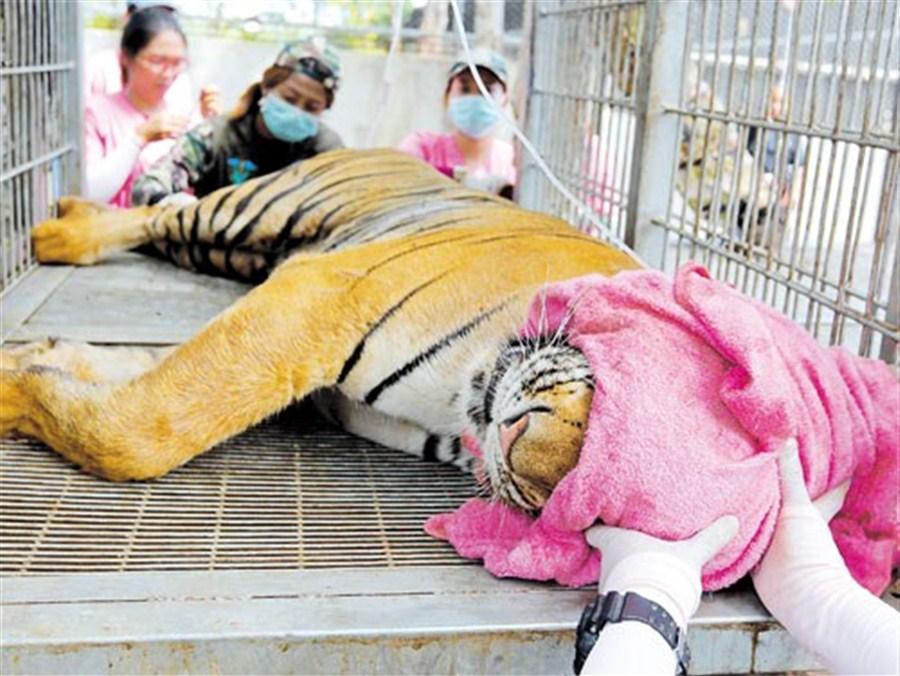 22, including 3 monks, face rap for wildlife trafficking