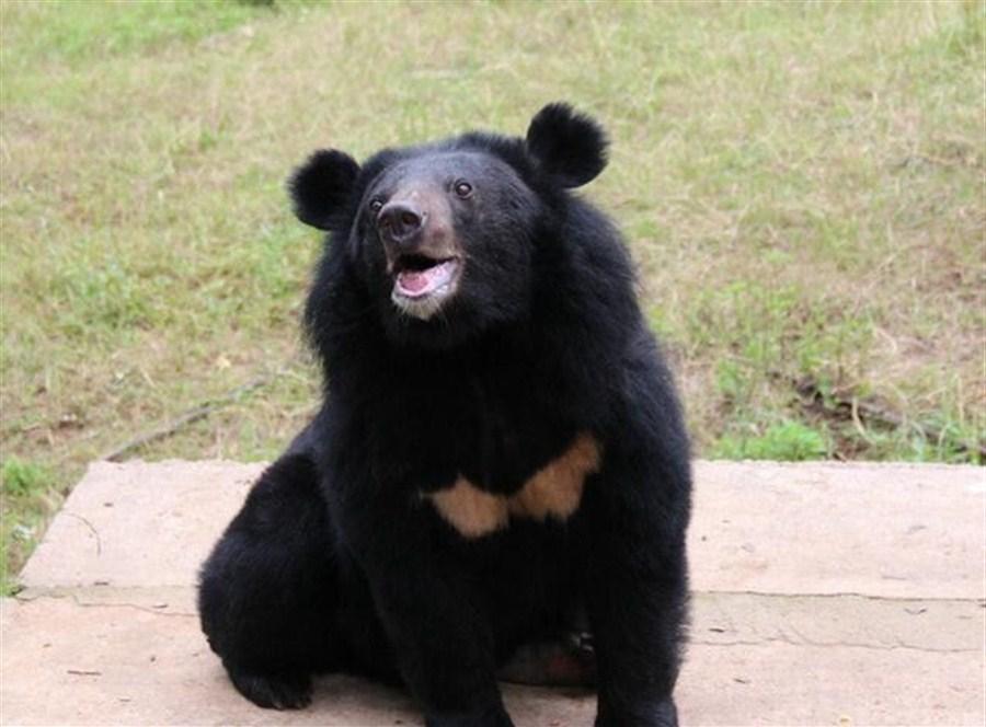 Tree camera catches bear stealing honey