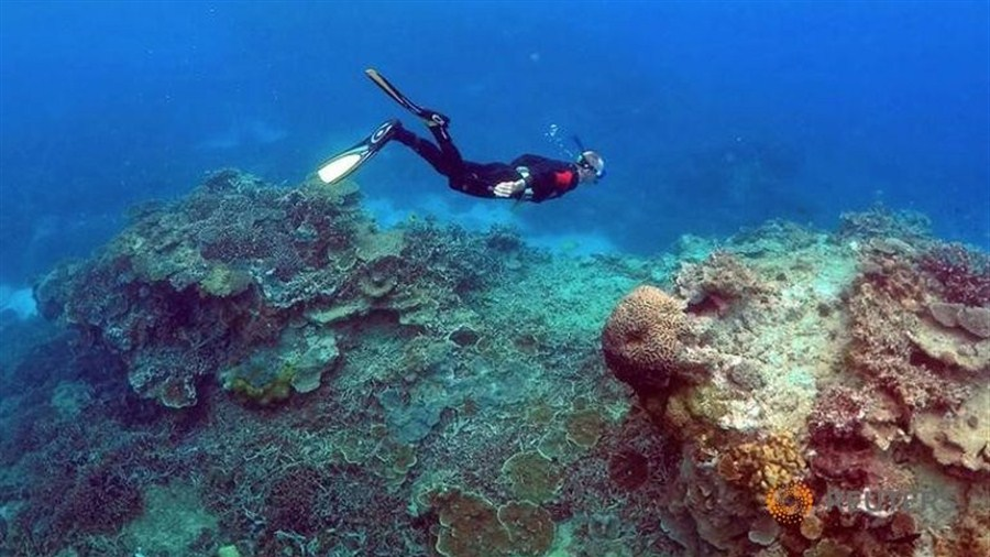 Scientists confirm largest recorded coral die-off at Australia's Great Barrier Reef