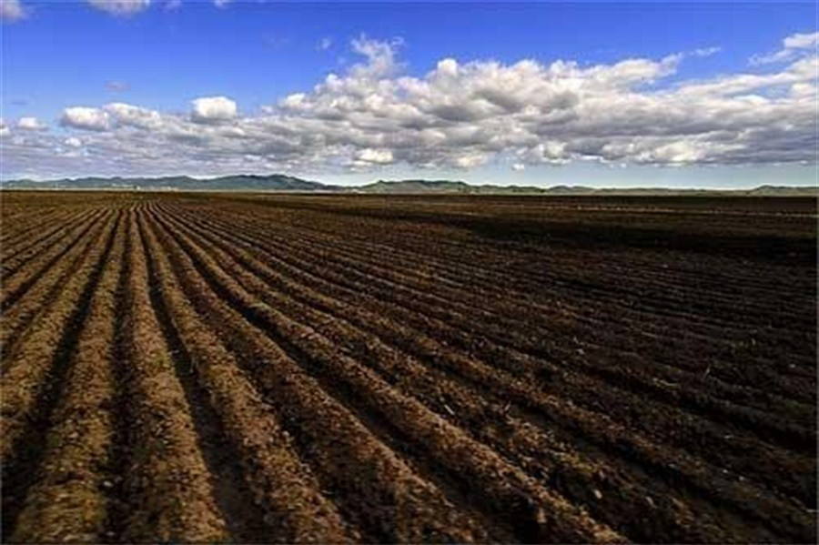 Farmers learn saving the soil lifts income