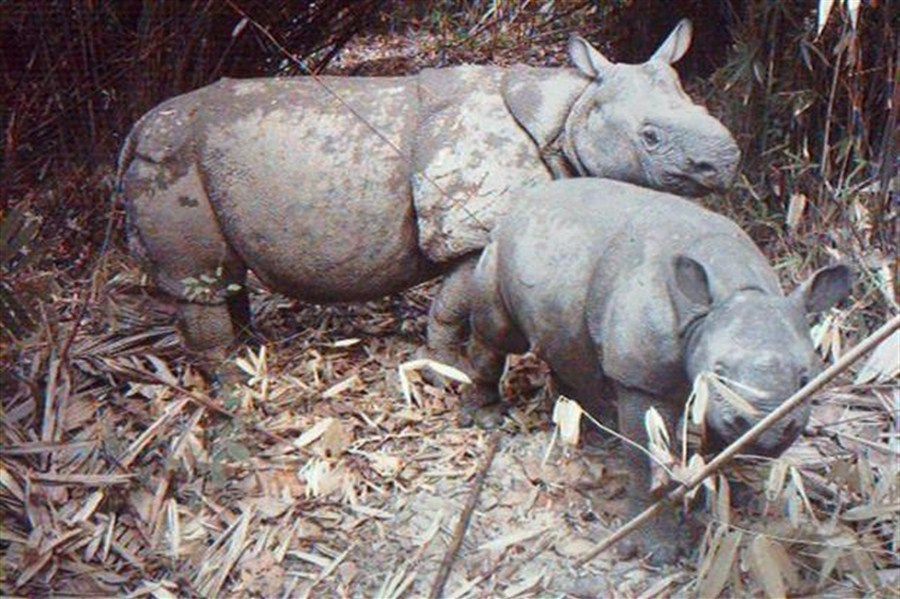 World's most protected sites 'failing to stop' illegal poaching