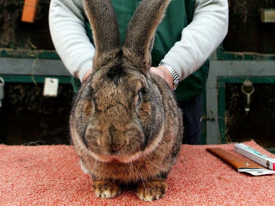 Rabbit death heaps more ignominy on United