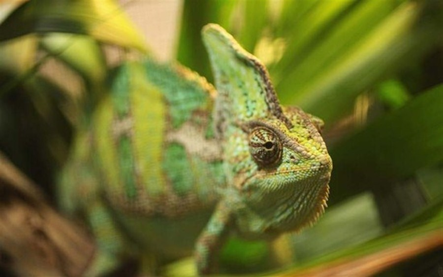 20 face charges for online wildlife trafficking