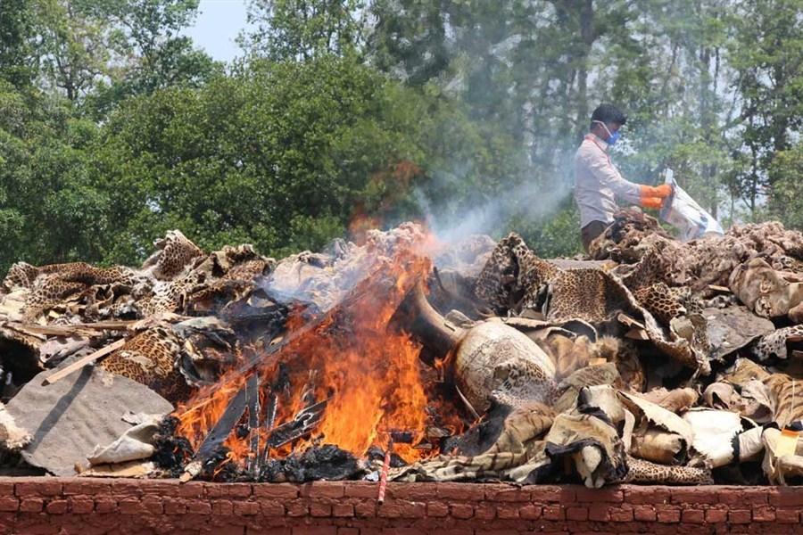 Seized animal skins burned in protest