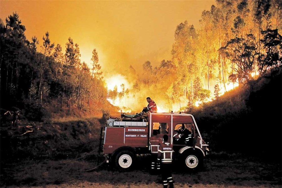 62 burn to death in forest fires