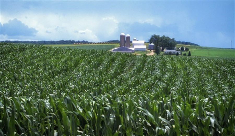 Kansas farmers awarded US$218m over GM corn