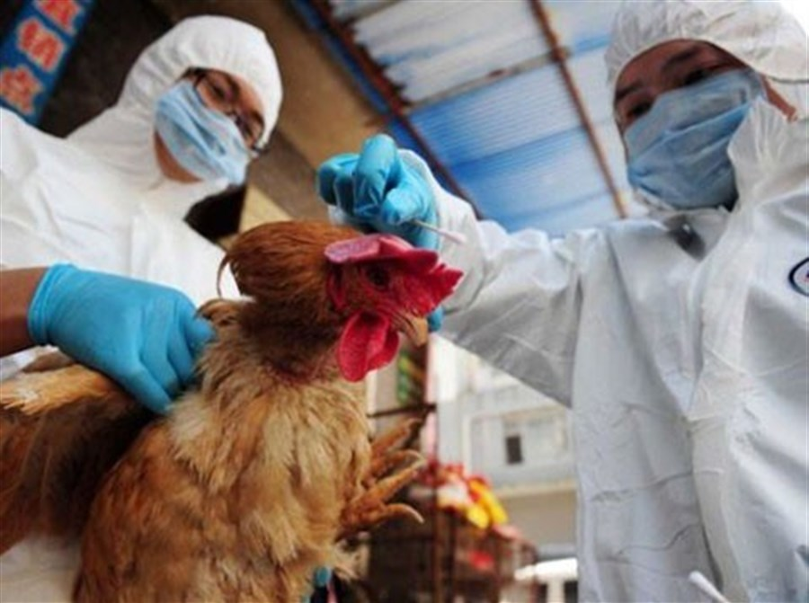 Death toll from bird flu raises concerns