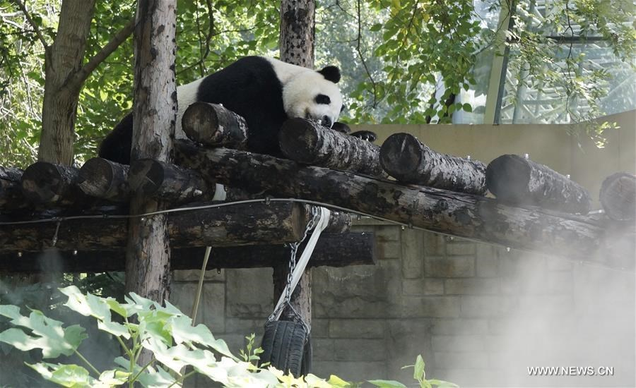 Special treat to cool off animals at Beijing Zoo