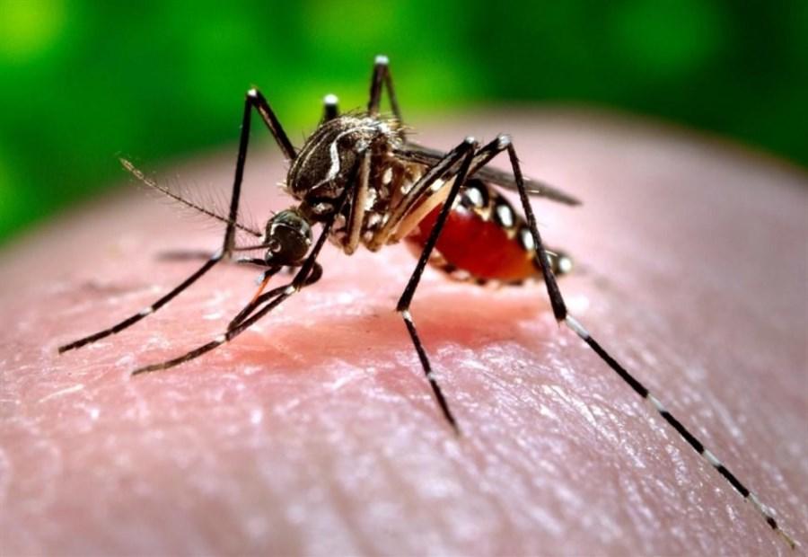 Hospitals overwhelmed as Sri Lanka dengue toll nears 300