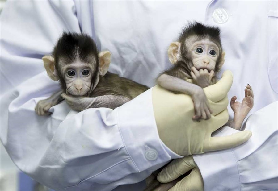 22 years after Dolly, world's first cloned monkeys born in Shanghai