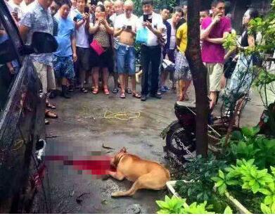 Dogs Bite Decatur Al: PIT BULL ATTACKS MAN IN CHINA