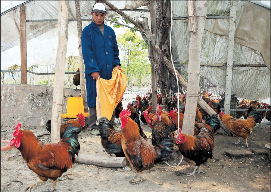 Poultry Farm Manager Resume