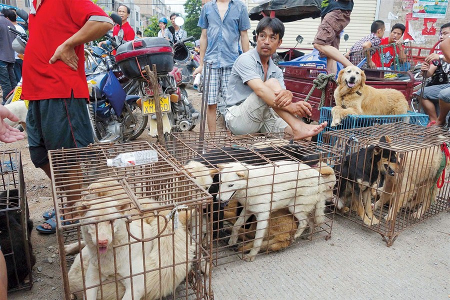 the invalid american views on the yulin dog meat festival Sorry, something has gone wrong copyerror  chinese vendors sell cooked  dog meat at a market in guiyang, southern china's guizhou province  the new  law tackles long-standing cultural beliefs about the benefits of eating dogs - for   a customer holds a puppy for viewing at yulin dog festival.