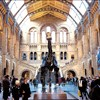 Dippy makes way for whale