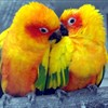 Love stories ... with wings: parrots of Suzhou Zoo