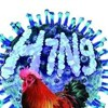 Central China province reports first H7N9 human infection