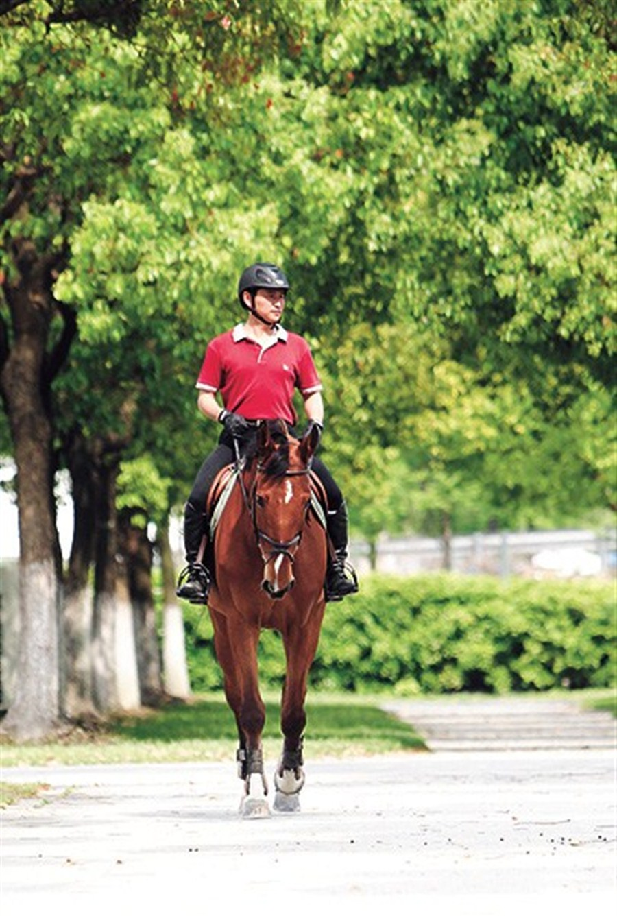 trot on over to an equestrian club shanghai daily