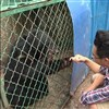 'Cute black puppies' raised by villager for two years turn out endangered black bears