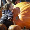 Pumpkin Festival celebrated in Vancouver, Canada