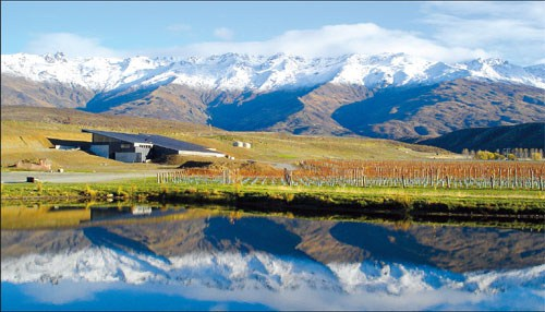 Central Otago Pinot Noir Vineyard
