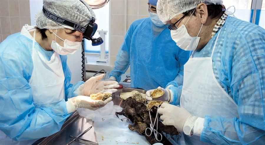 Preserved Ice Age puppies awe scientists