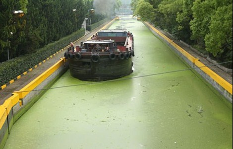 A ship stops on a stretch of the duckweed-covered Dianpu River in Minhang District yesterday. High nutrient levels and rising temperatures have contributed to the growth of algae, which is clogging up smaller waterways.