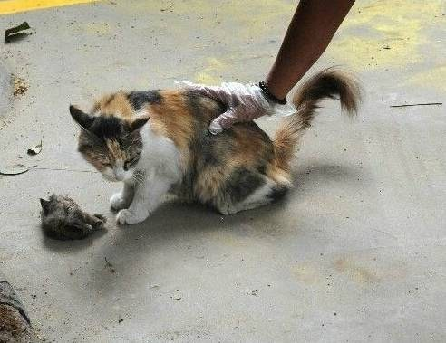 Decapitated Kitten Evokes Fury Among The Public Shanghai