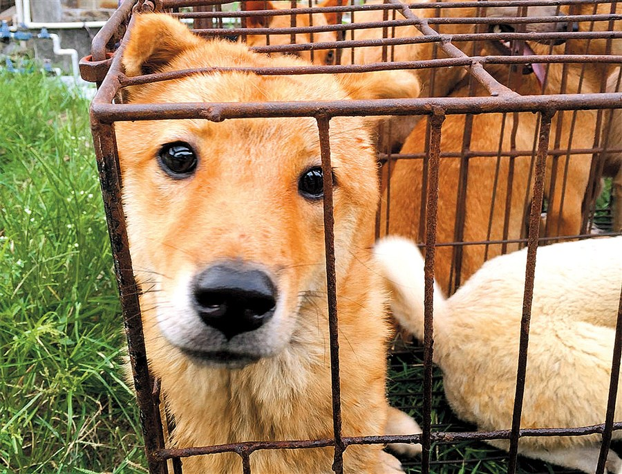 Dogs saved from the dinner table   Shanghai Daily