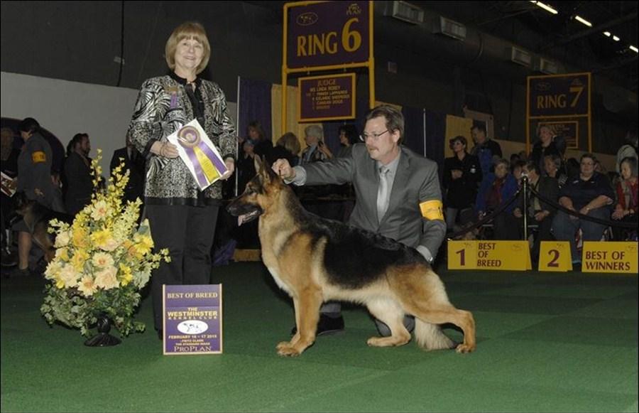 Rumor has it: German Shepherd winner at Westminster dog show