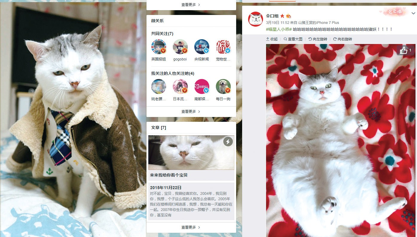 Xiao Guai, a 5-year-old Scottish fold, is one of the brightest celebrity pets on Weibo, China's largest social networking service. Lynn Wang, the cat's owner, operates a pet-care products company and her plump — some think ugly — cat is a big advertising asset.
