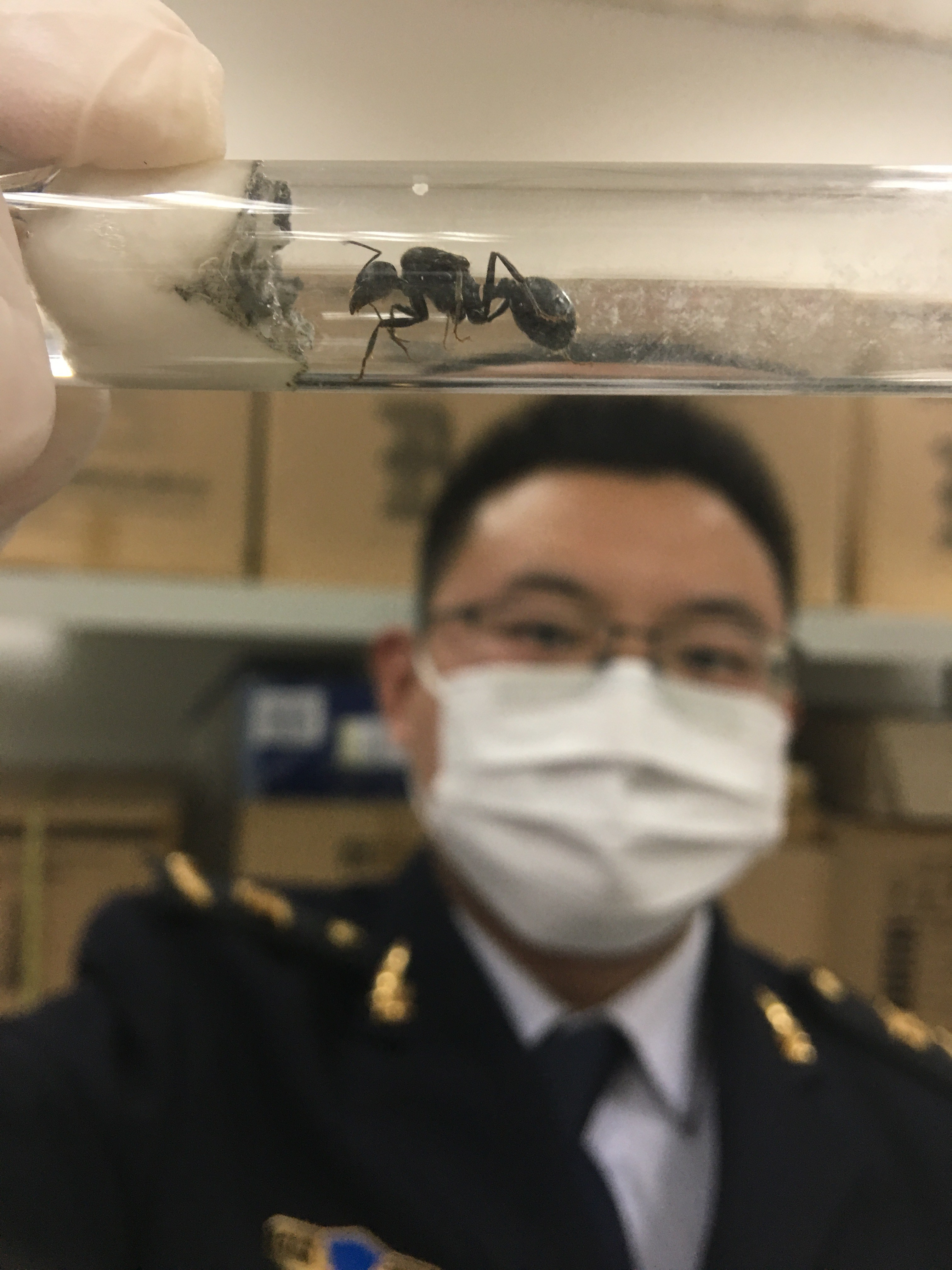 An officer with the Shanghai Entry-Exit Inspection and Quarantine Bureau shows an ant hidden in a parcel sent from Isreal.