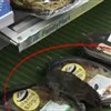 Convenience store in Metro station closed after rat scare