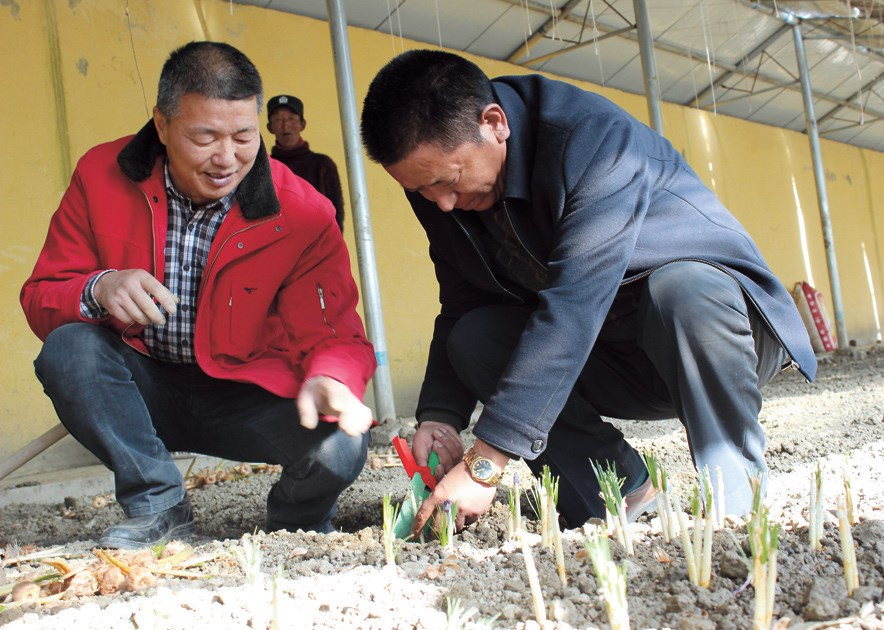 A county official helps locals with cultivation at an agricultural park established as part of anti-poverty efforts in Gyantse.