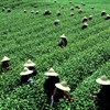 Hot weather to hit Longjing tea harvest in east China