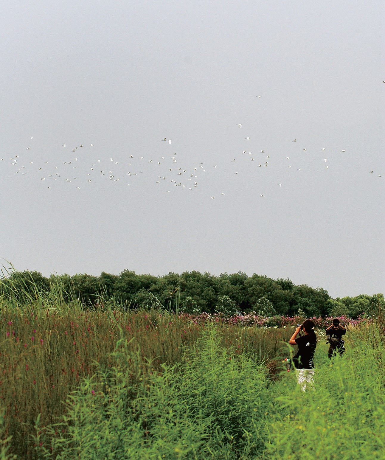 Volunteers conducting a monthly bird survey inan aquatic plant reserve in Songjiang.— Courtesy of the Shanghai Wild Bird Society
