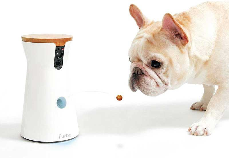 Pet camera Furbo is designed for dogs, allowing owners to see, talk and even toss treats.